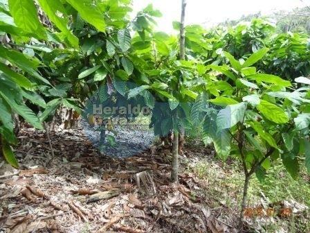 Fazenda com 100 Ha em Valença-Ba