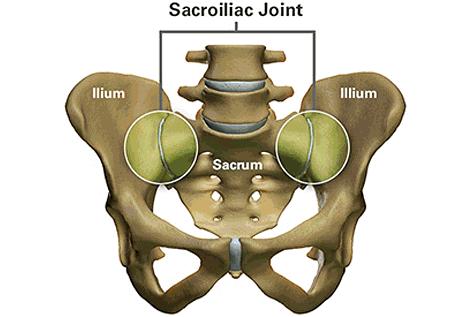 Sacroiliac Joint Anatomy