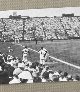 San Francisco Seals Stadium Postcard