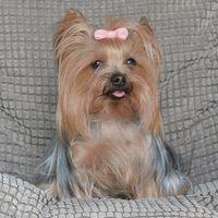 A Suzy's Dog Fashion - Since 1954 Customer
