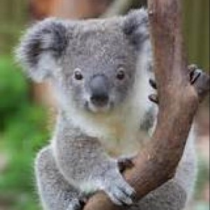 A Joolca Australia Customer