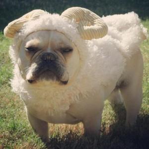 A French Bulldog Love Customer