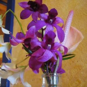 A Plant Revolution Inc. Customer
