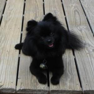 A Paramount Pet Health Customer