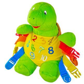 Bucky Turtle