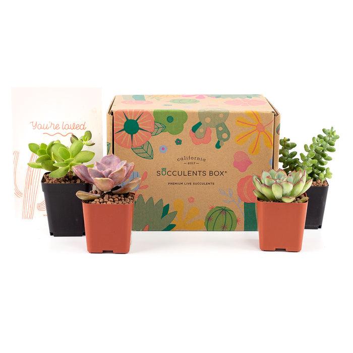 4 Succulents/ Month