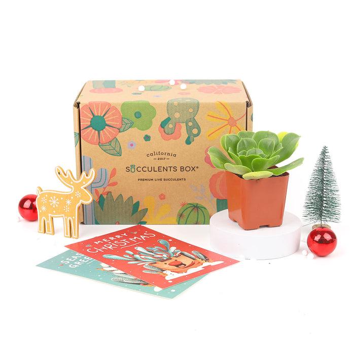 1 succulent/ month - 12 month subscription