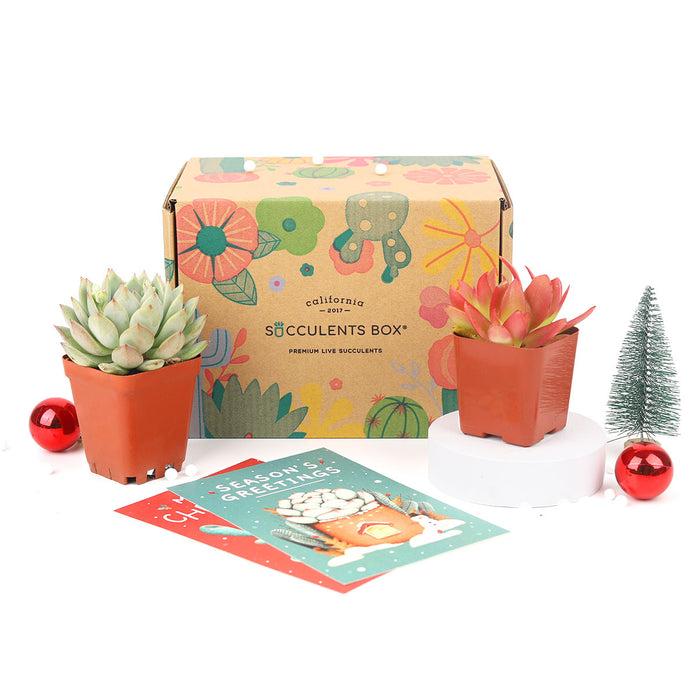 2 succulent/ month - 3 month subscription