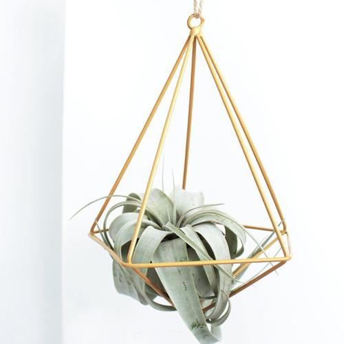 1 Airplant/ Month - 3 month subscription