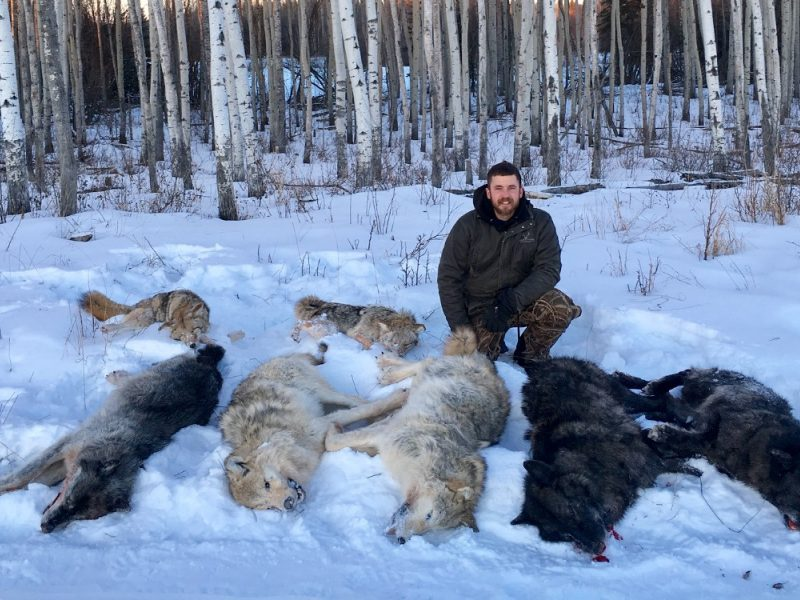 Canadian Wolf Hunting Expeditions