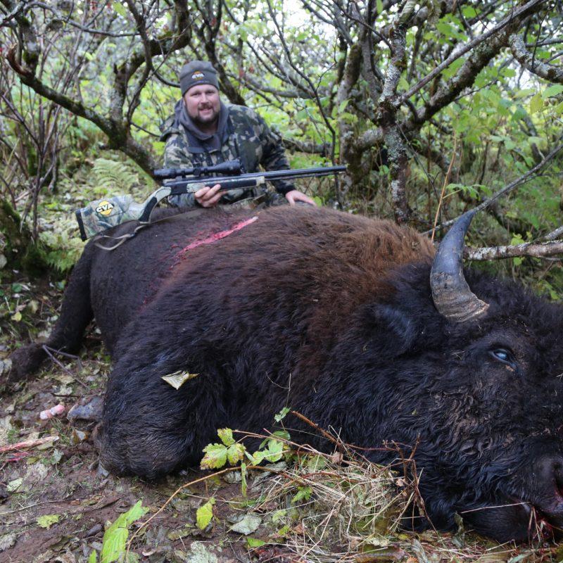 Bison Alaska