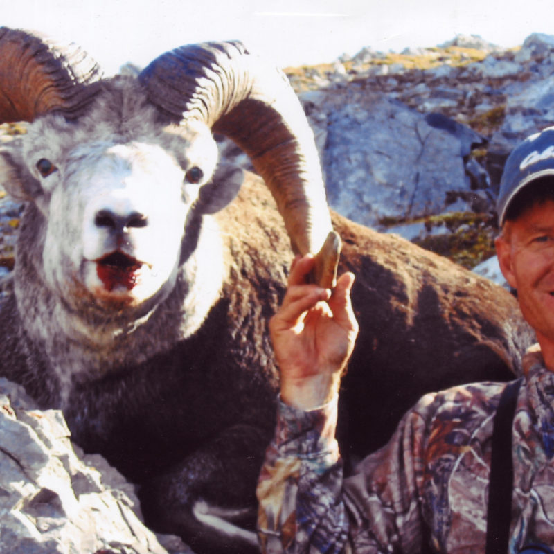 David Grogan Stone Sheep