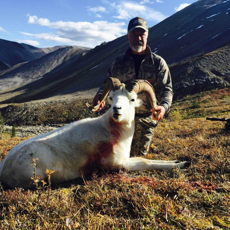 Delvin Dupuy Dall Sheep