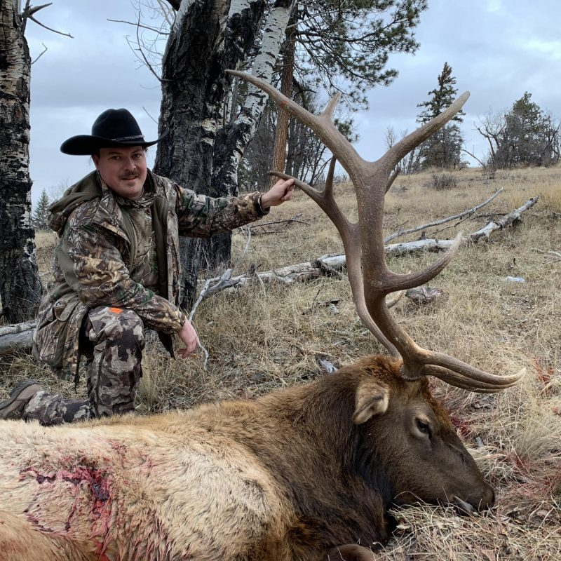 Dexter Bull Elk Nov 2018