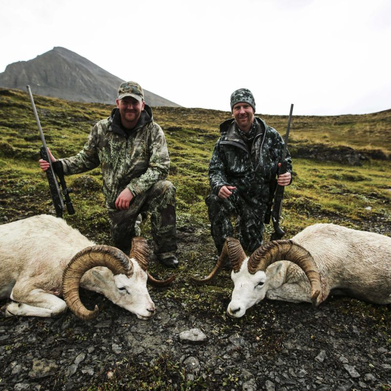 Duncan Ryan Sheep 1