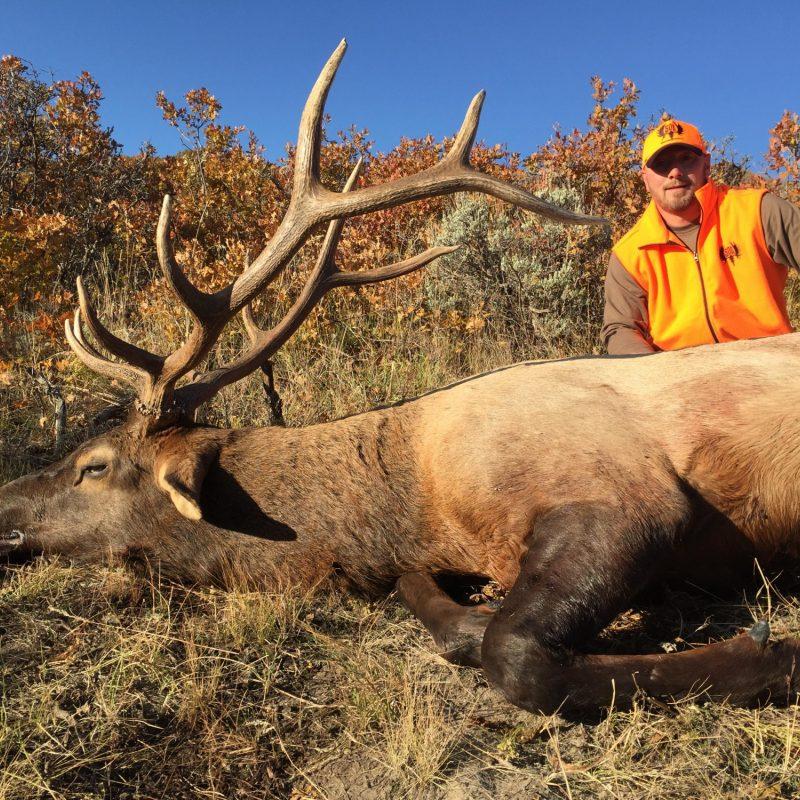 Jason Reese Elk 3