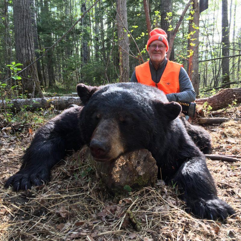 Lynn Schmeichal Bear 1