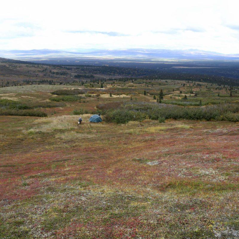 Moose Spike Camp Medium