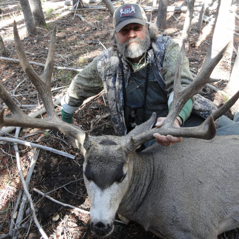 QM Deer 1