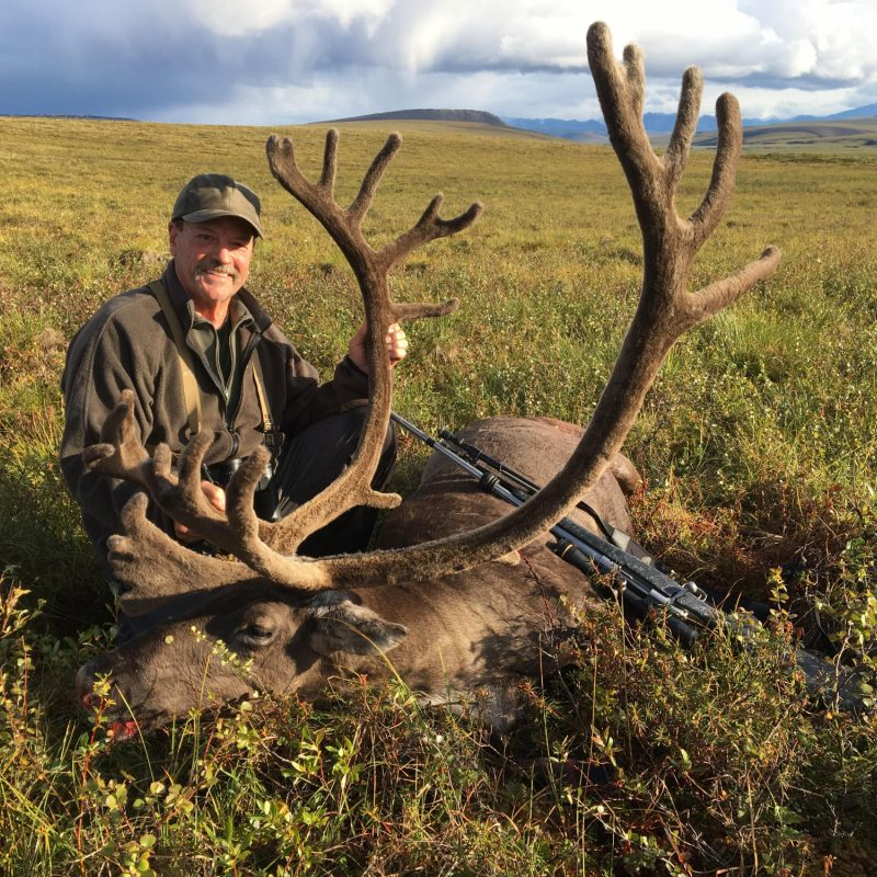 Tom Mangold Caribou
