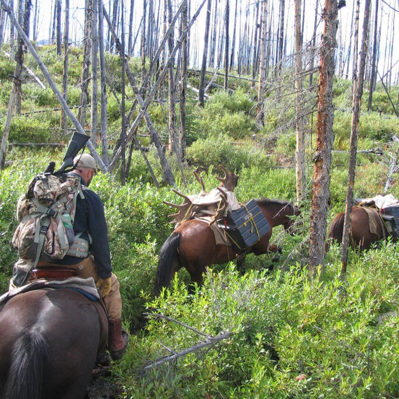 Trail Cam 025