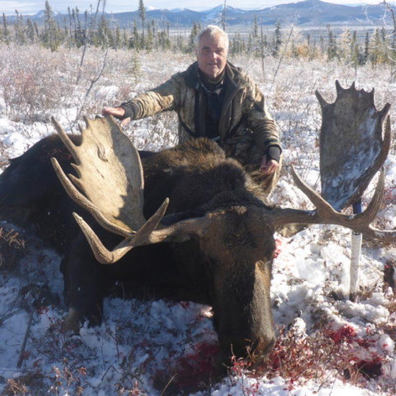 Winston Gant Moose