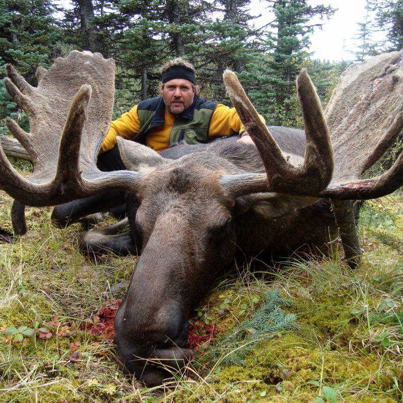 Theis moose