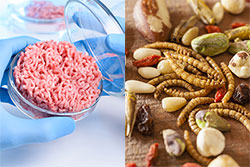 Lab-grown meat and insects