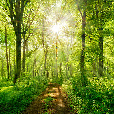 Natural-Forest