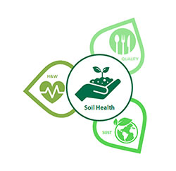 THG - Soil health Organic and Beyond 2020