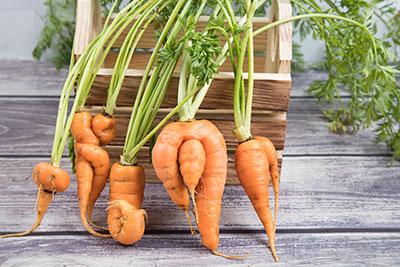 Few deformed carrot roots