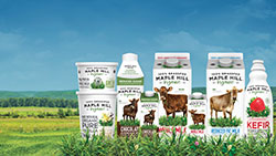 Maple Hill milk