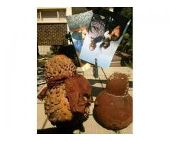 African Sangoma +27738183320 With Powers - Bring Back Lost Lover Spells