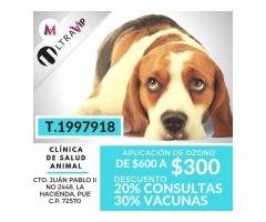 Veterinario urgencias 24 hrs 1997918