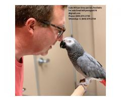 Bold African grey parrots (805) 874-2739