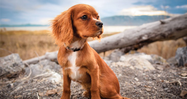 Nationwide: Disaster Plan for Pets