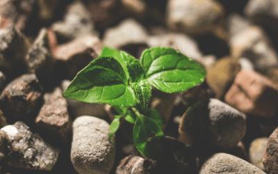 Thriving Traits: Hopefulness