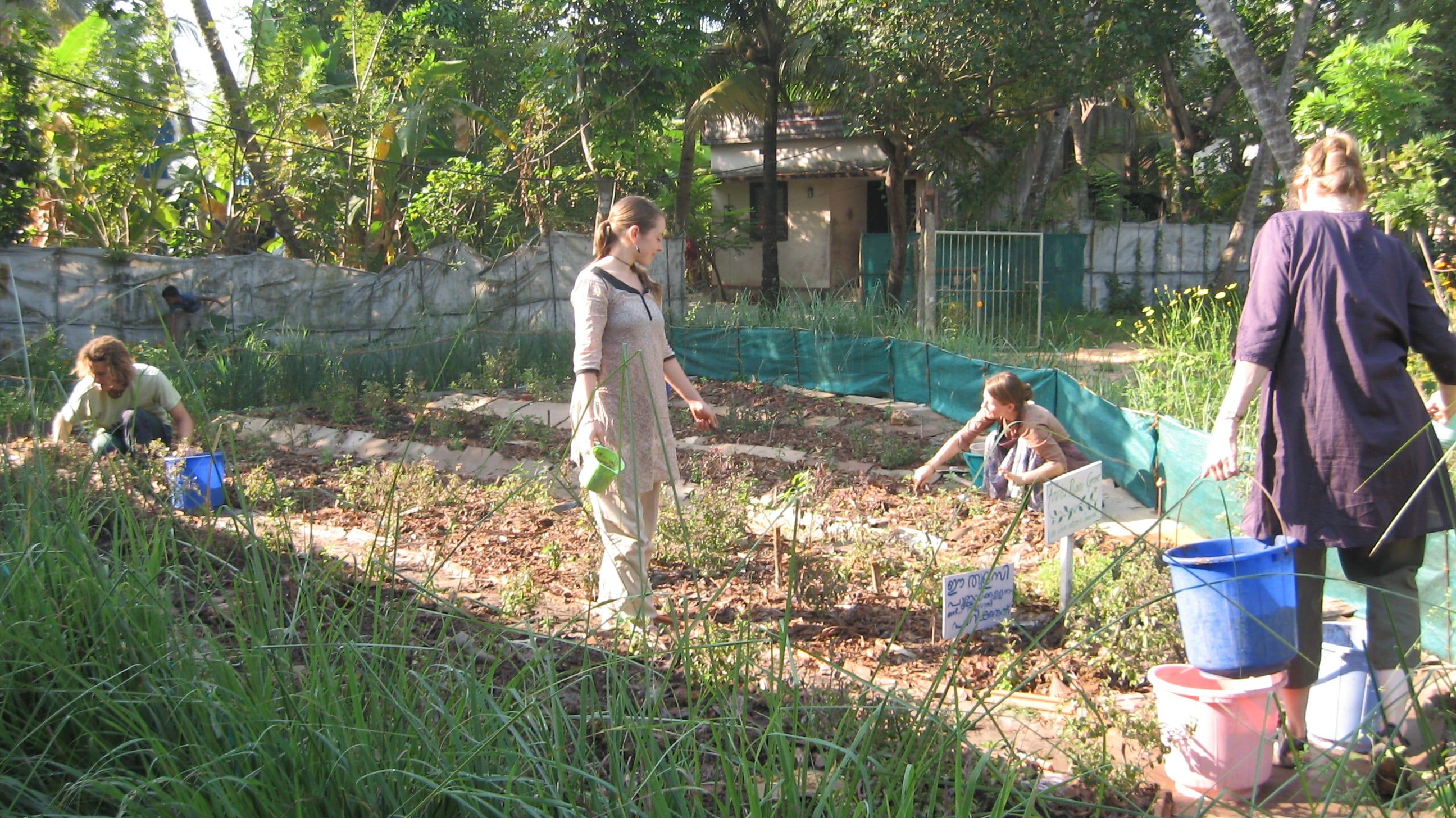 gardening part 3 diy organic fertilizer lumos student travel
