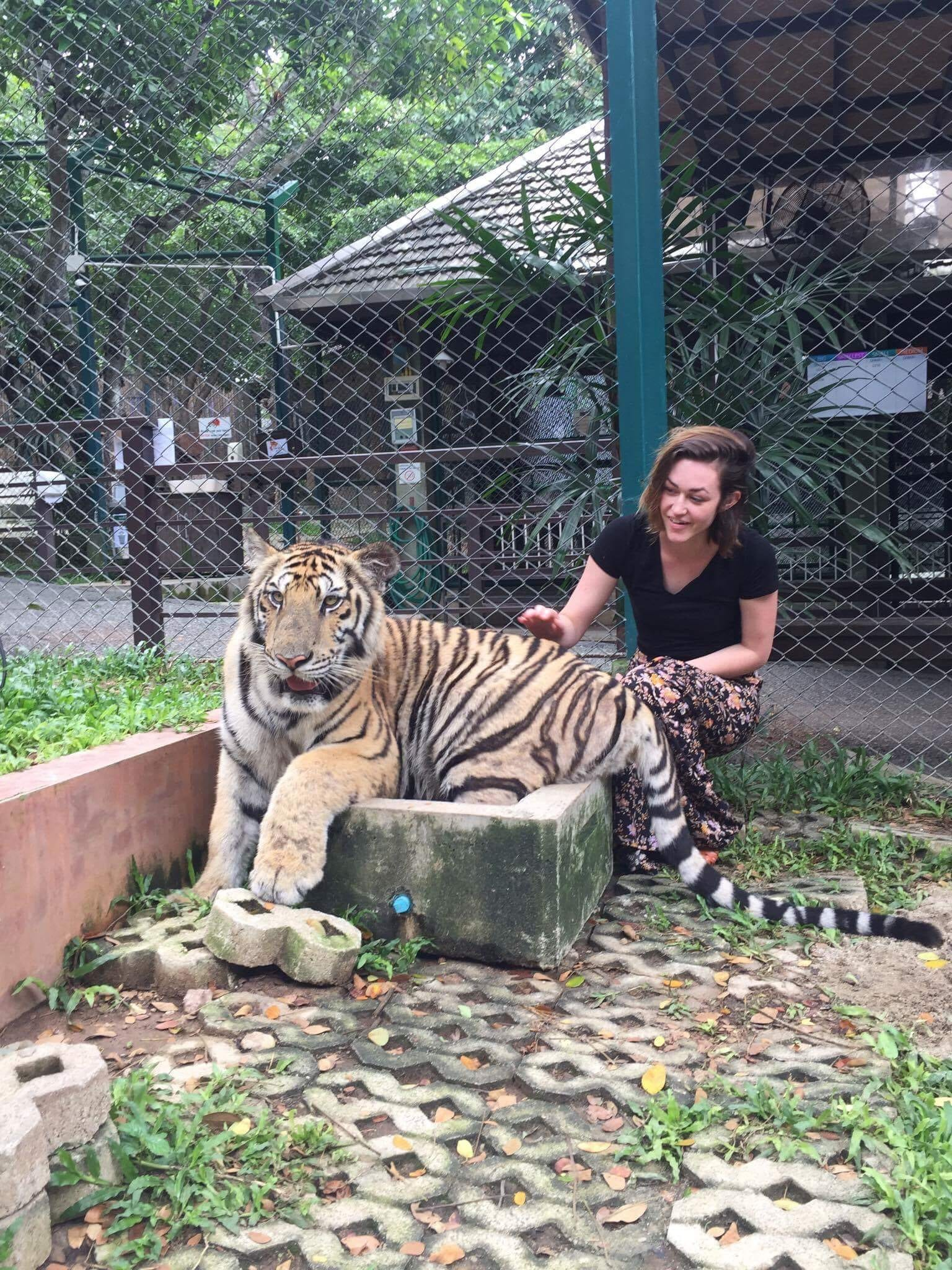 Petting a tiger (!!!)