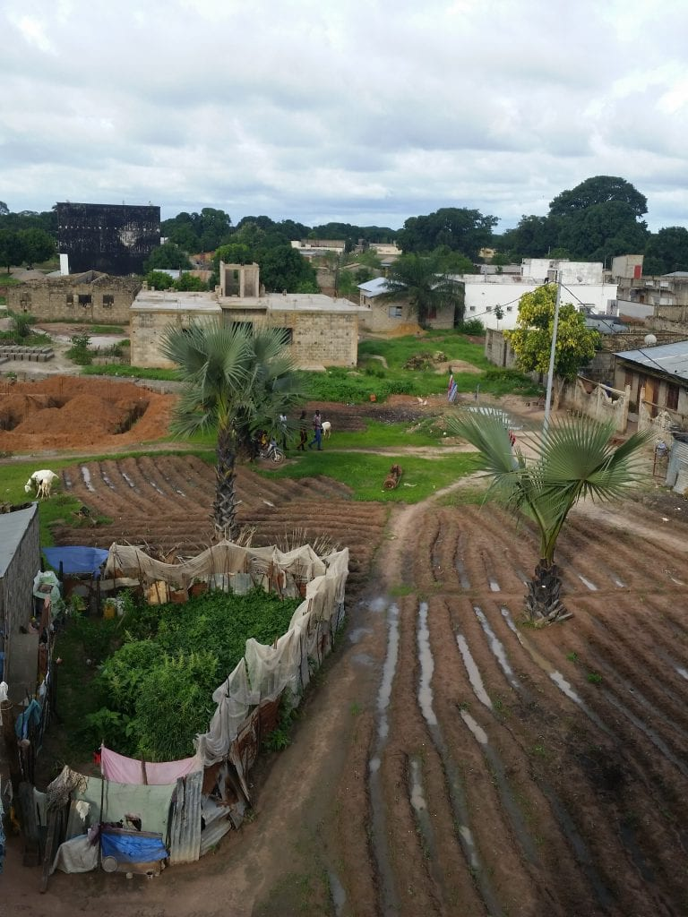 Une ferme d'arachide/A peanut farm