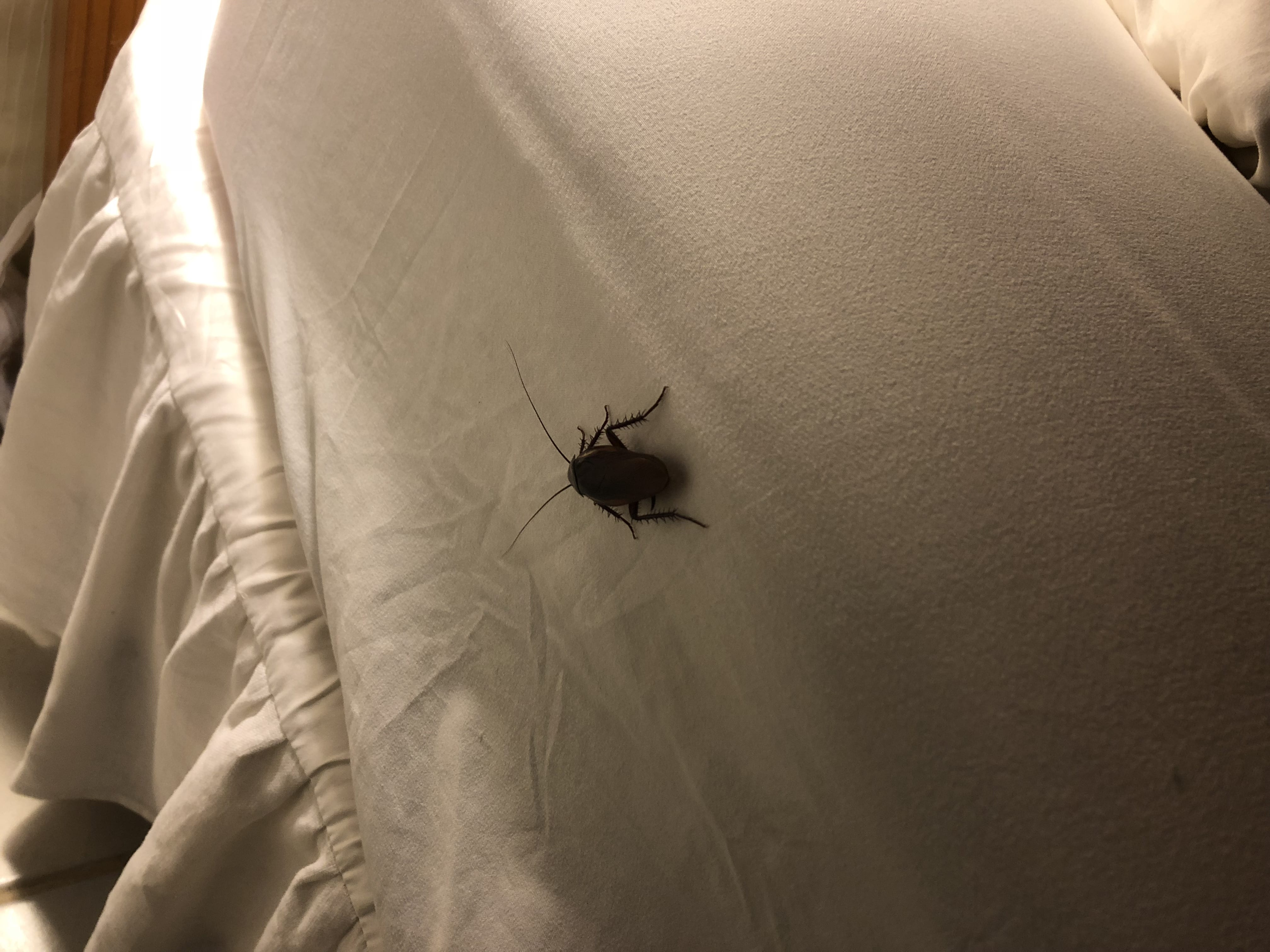 A cockroach decided to join me in bed at 4:30 am. I decided that was a great time to go read my Bible