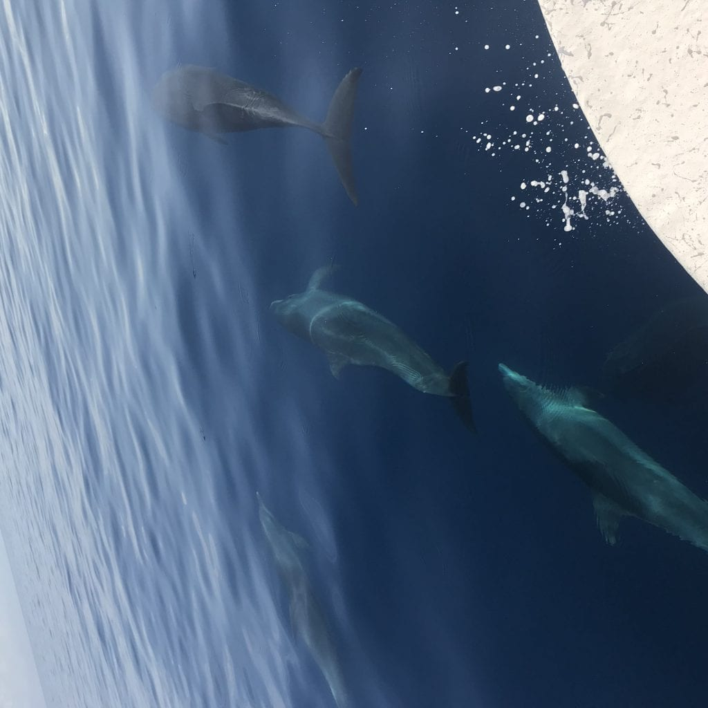 Dolphins swimming next to the boat! Unreal!