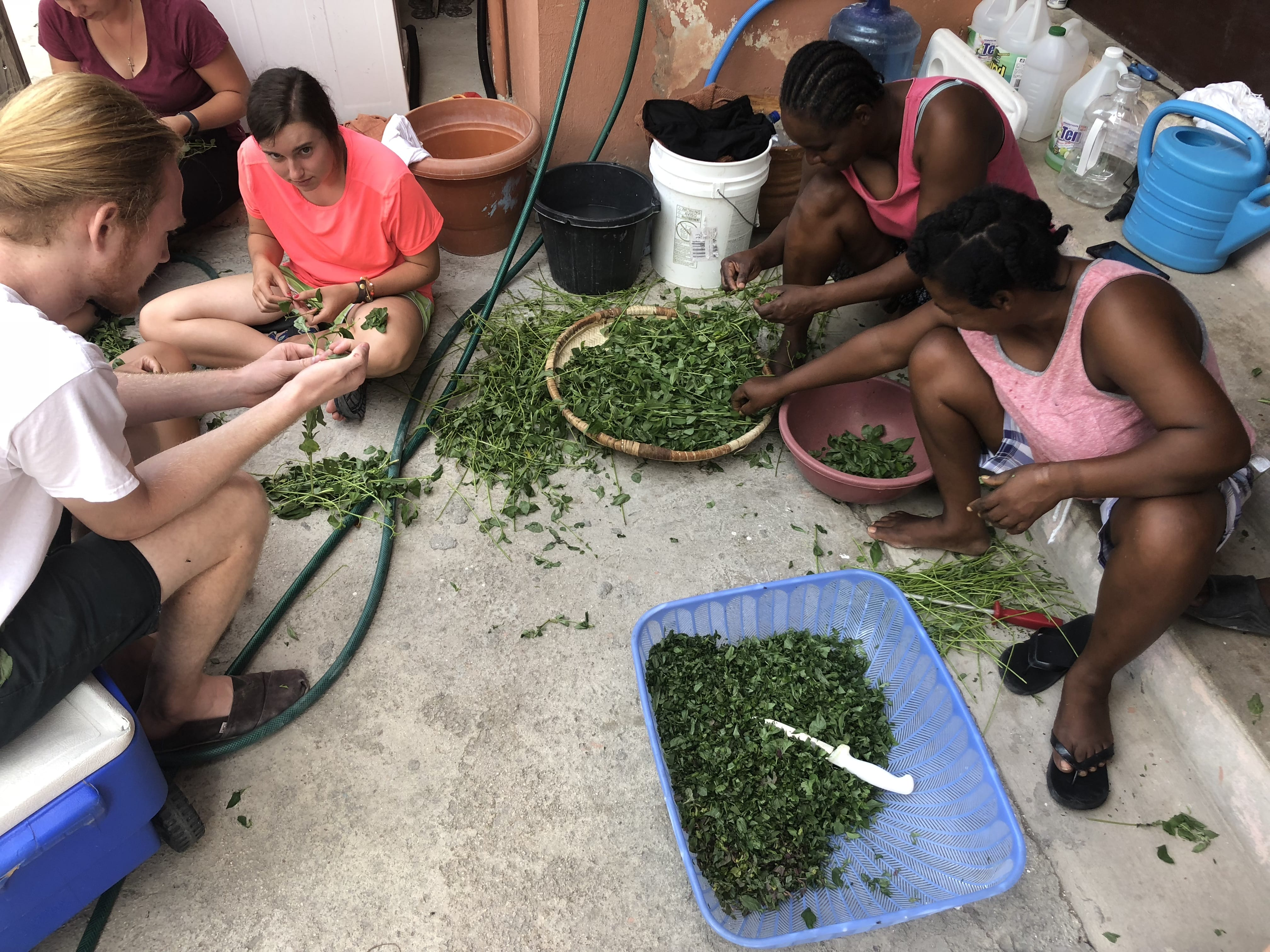 The tedious process of picking lalo leaves...it takes a village!