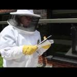 Georgia Tech Urban Honeybee Project