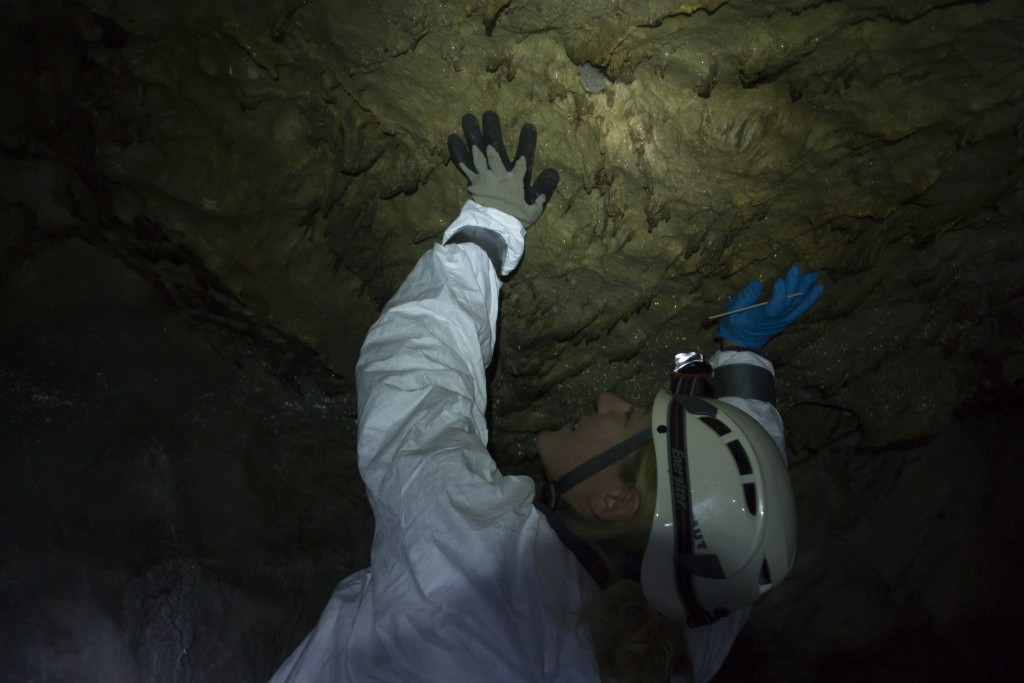 White River Cave near Rockmart Georgia perimyotis myotis bats spelunking caving underground Kyle Gabriel Jackie Jeffery