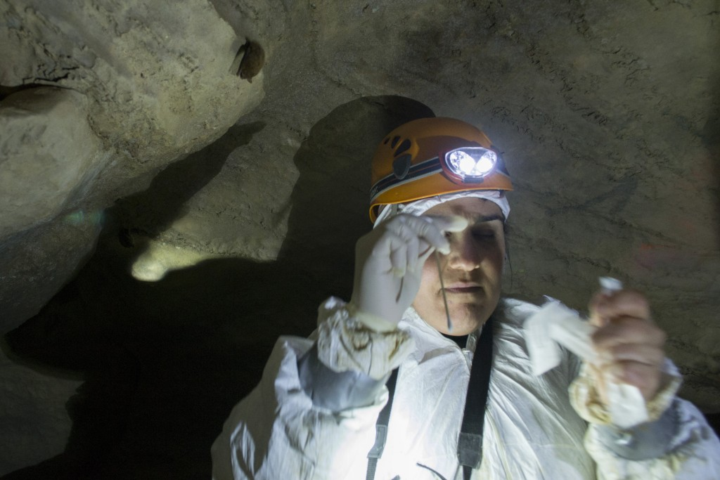 White River Cave near Rockmart Georgia perimyotis myotis bats spelunking caving underground Kyle Gabriel Katrina Morris
