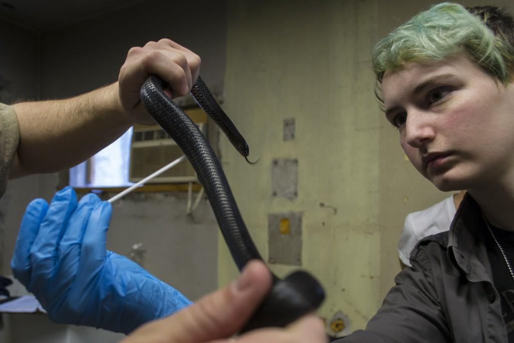 Cami Rose swabbing an indigo snake, Photo by Kyle Gabriel