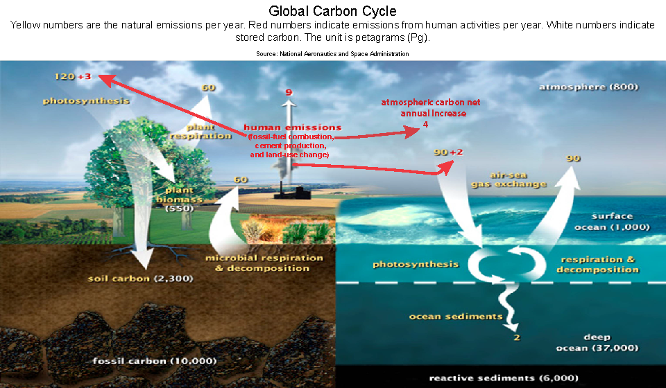 Lab 4 The Carbon Cycle Part 1