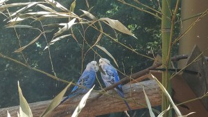 Two of the many birds in the enclosure in which you can walk in and feed the birds.