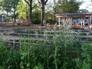 "Nichols, Annie. ""Edgewood Community Learning Garden"". Atlanta In Town Paper. May 4, 2005. Web. http://www.atlantaintownpaper.com/wp-content/uploads/2015/05/8Sb5xzpIh5JqjcOKoDSYzcwhNB_S4hfZv2zPrsTVHUk.jpeg. Last accessed February 1, 2016."